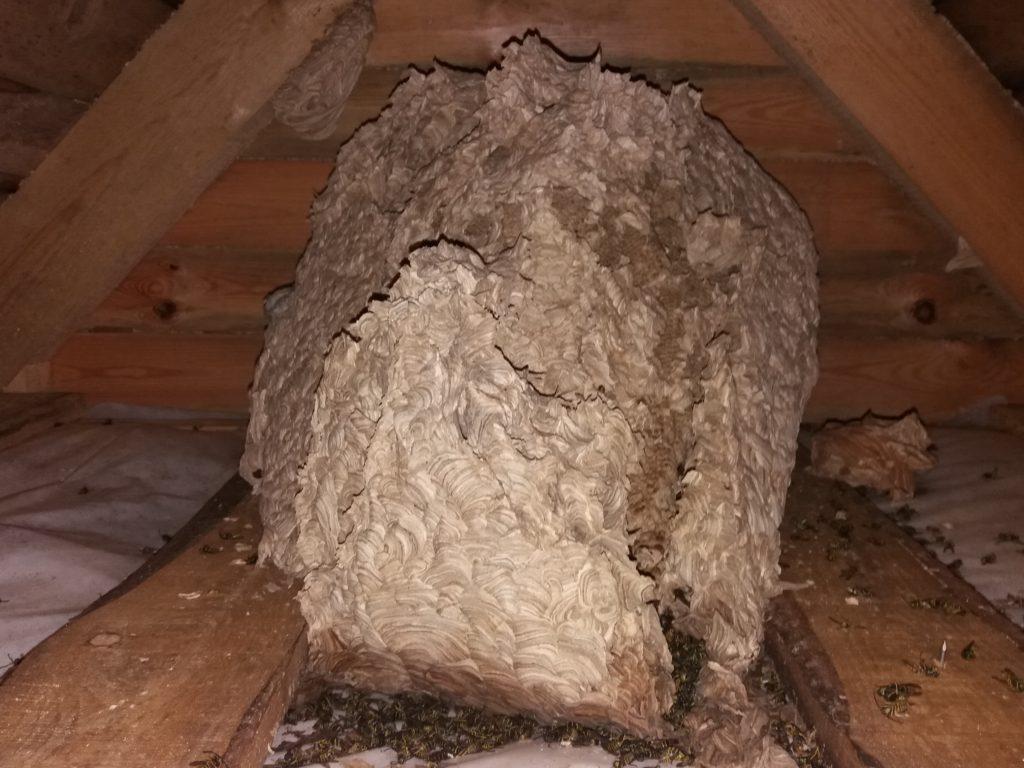 Заказать уничтожение ос и осиных гнезд